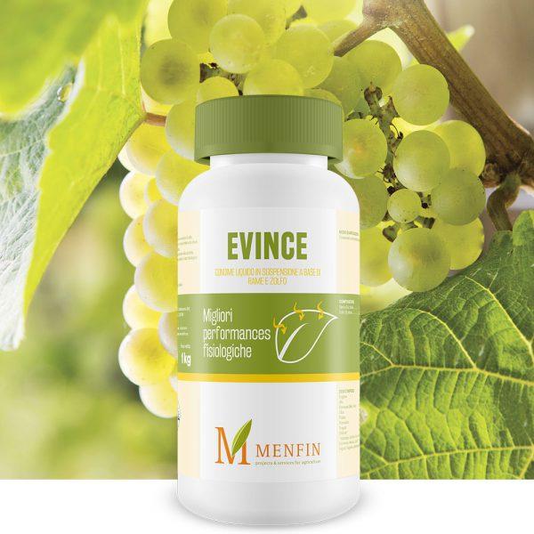 Evince - Menfin